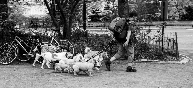 -dogs in the park