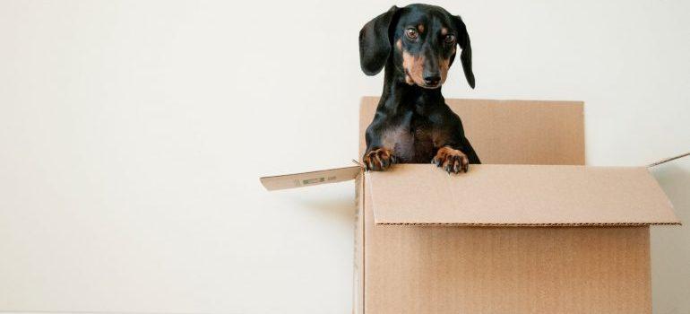 A dog in a cardboard box