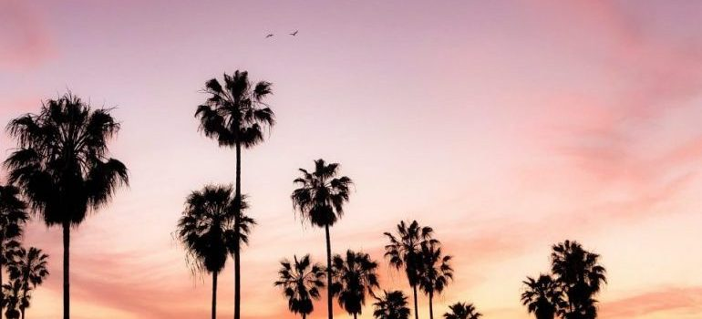 LA beach during the sunset