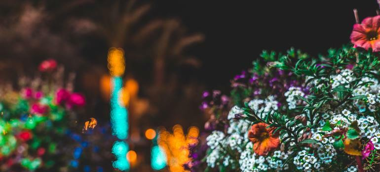 Things to do in December in Los Angeles by seeing flowers