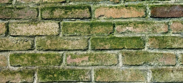 Brick wall with mold