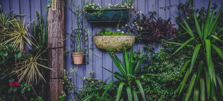 Climbing garden of potted plants
