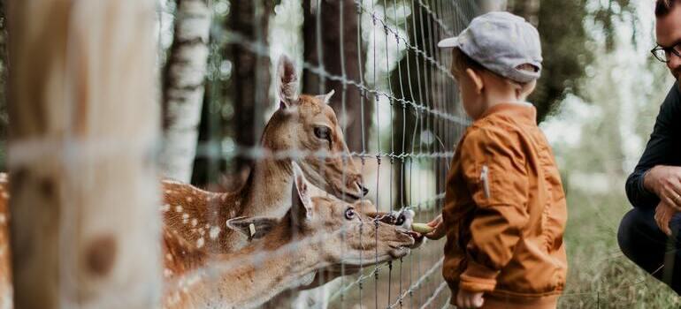 a child feeding animals