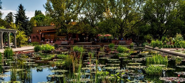view of the lake in Botanics garden asone of places in Denver for nature lovers