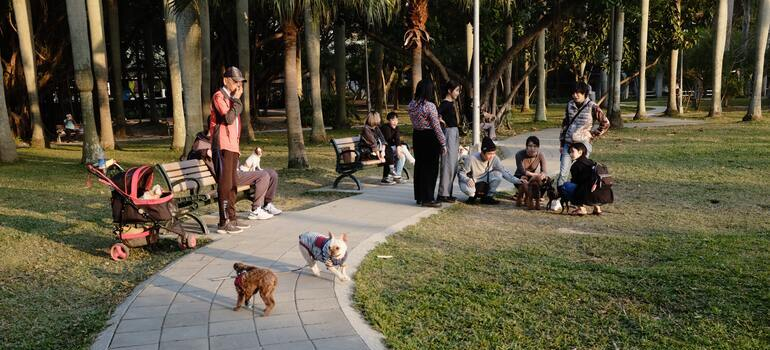 people with their dogs in the park